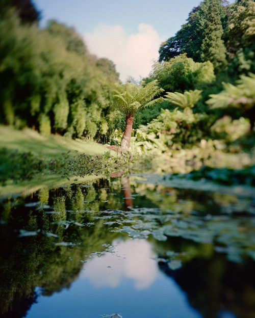 Trebah garden, Cornouailles, Angleterre pour Canopée
