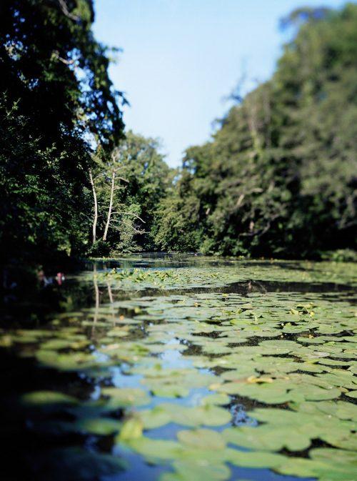 Parc de Majolan pour la ville de Blanquefort