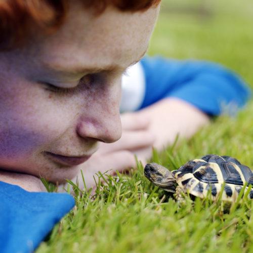 tortue et enfant dans l'herbe