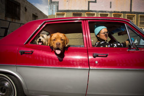 Asian_Dogs_0185