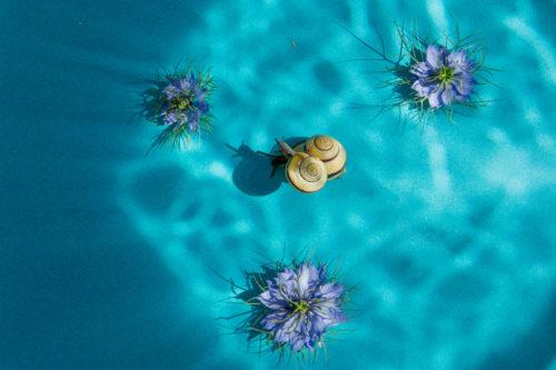 snailunderwater